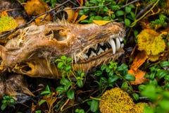 Slachtoffer van wildernis Royalty-vrije Stock Foto's