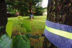 Slackline在绳索步行的公园 库存照片
