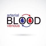 Slagaderlijk en aderlijk bloed conceptuele illustratie, bloedcircula vector illustratie