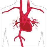 Slagadersysteem in menselijk lichaam vector illustratie