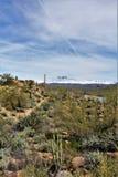 Slager Jones Beach, het Nationale Bos van Tonto, Arizona, Verenigde Staten stock foto