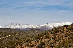 Slager Jones Beach, het Nationale Bos van Tonto, Arizona, Verenigde Staten stock foto's