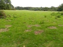 Slagfält av Hastings Arkivfoto