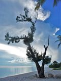 Slagit träd vid kusten arkivfoton