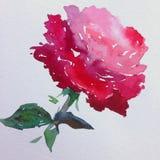 Slaglängder för apelsin för ros för blomma för abstrakt begrepp för vattenfärgkonstbakgrund röda färgrika texturerade röda Royaltyfri Fotografi