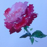 Slaglängder för apelsin för ros för blomma för abstrakt begrepp för vattenfärgkonstbakgrund röda färgrika texturerade röda Royaltyfri Bild