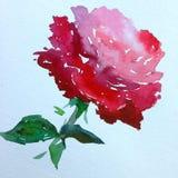 Slaglängder för apelsin för ros för blomma för abstrakt begrepp för vattenfärgkonstbakgrund röda färgrika texturerade röda Royaltyfri Foto