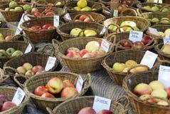 slags äpplen Royaltyfri Fotografi