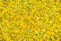 slags växt sesbania thailand för blomma Arkivbild