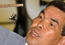 slagsmåldomarespindlar två som håller ögonen på Arkivbild