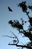 Slagträ på himlen Arkivbild
