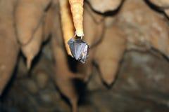 Slagträ på stalagmit Royaltyfria Foton