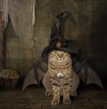 Slagträet - katt arkivbilder