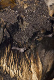 Slagträn i grottan Royaltyfria Foton