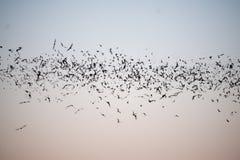 Slagträn som flyger i en linje royaltyfri foto