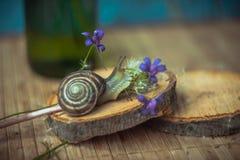 Slak in de bloemen Royalty-vrije Stock Afbeelding