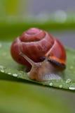 Slak in de regen stock fotografie