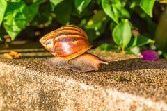 Slak in de tuin Stock Foto
