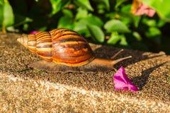 Slak in de tuin Royalty-vrije Stock Afbeeldingen