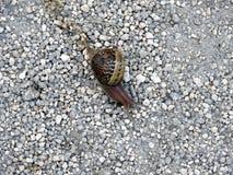Slak - een langzaam dier dat door shell wordt behandeld stock afbeeldingen