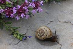 Slak en bloemen Royalty-vrije Stock Afbeelding