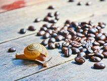 Slak en koffiebonen op de houten lijst Royalty-vrije Stock Foto