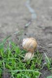 Slak in het gras Stock Afbeelding