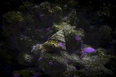 Slak in marien aquarium Stock Foto's