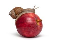 Slak op Apple Schroefpomatia Stock Foto