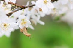 Slak op de bloeiende boom Stock Afbeelding