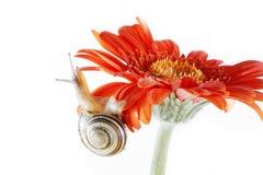 Slak op de bloem Royalty-vrije Stock Afbeeldingen