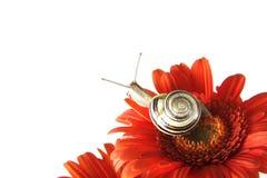 Slak op de bloem Royalty-vrije Stock Foto's