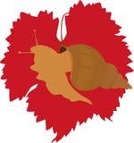 Slak op druivenblad stock afbeelding
