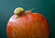 Slak op een appel Emerald Background royalty-vrije stock foto