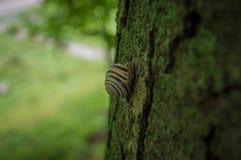 Slak op een boom in de straat stock afbeeldingen