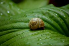 Slak op een groen verlof Stock Foto