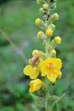 Slak op een wilde bloem na regen Stock Foto's