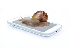 Slak op slimme telefoon op witte achtergrond Stock Afbeelding