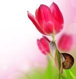 Slak op tulp stock afbeelding