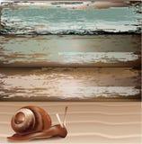 Slak op zand met houten achtergrond Stock Foto