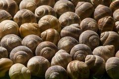 Slak-shell Stock Fotografie