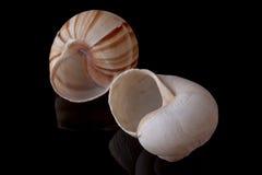 Slak Shell Royalty-vrije Stock Foto's
