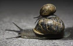 Slakken stock fotografie
