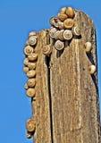 slakken Stock Afbeeldingen