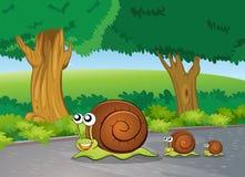 Slakken bij de weg Stock Foto