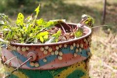 Slakken die op oude roestige en geschilderde barral in de tuin zitten ongedierte royalty-vrije stock afbeeldingen