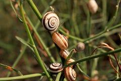 Slakken in het gras Stock Afbeeldingen