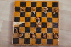 Slakken met schaak Stock Foto