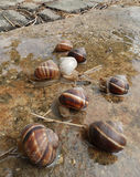 Slakken na regen stock foto