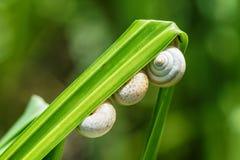 Slakken op een gras, close-up Stock Foto's